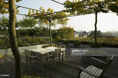 Stock Photo : Large roof terrace with horizontally trained plane trees…