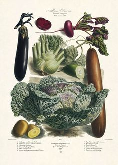 The Vegetable Garden 1850-1895 Album Vilmorin.