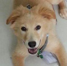 Cute Puppy Named Muffin