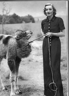 Marlene Dietrich-One of my favorite people with a wee camel. My mind is blown.
