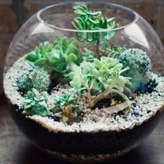 Updated terrariums with succulents - low maintenance and stylish!