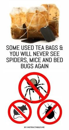 Used Tea Bags to Completely Get Rid Of Spiders, Mice and Bed Bugs Used tea bags to completely get rid of mice and spiders. Use this natural method and never see spiders and mice again at your home. Deep Cleaning Tips, House Cleaning Tips, Cleaning Hacks, Natural Cleaning Solutions, Pest Solutions, All You Need Is, Get Rid Of Spiders, How To Repel Spiders, Mice Repellent