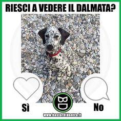 Lo vedi il #dalmata ? Tagga i tuoi amici e #condividi #bastardidentro #cane www.bastardidentro.it