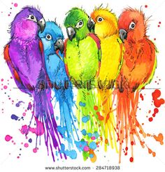 Funny Parrots T-Shirt Graphics, Colorful Parrots Illustration With Splash Watercolor Textured Background. Illustration Watercolor Colorful Parrots For Fashion Print, Poster Textiles, Fashion Design - 284718938 : Shutterstock