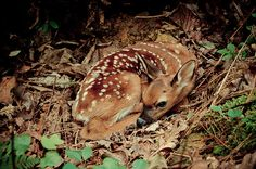 salveo:    bambi (by BecomeTheChange)