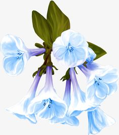 Tuberose flower decoration painted cartoon, Decorative Plants Image, Flowers, Cartoon Flowers PNG Image and Clipart