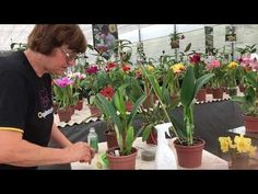 Youtube, Plants, About Plants, Falling Down, Garden, Compost, Nursery Trees, Suits, Washroom