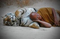 """""""Got Places To Go and People To See!"""" (Tiger and Buddhist monk in peace)"""