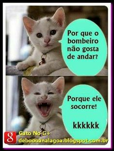 Ideas for quotes sarcastic humor jokes Avakin Life, Memes Status, Funny Cat Memes, Funny Humor, Good Jokes, Sarcastic Humor, Sarcasm, Funny Photos, Funny Animals