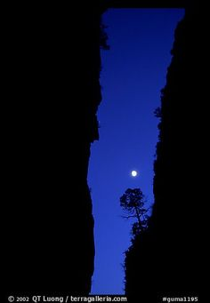 Tree and moon at night through the narrow canyon of Devil's Hall. Guadalupe Mountains National Park,Part of gallery of color pictures of US National Parks by professional photographer QT Luong, available as prints or for licensing.