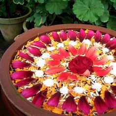 Floating flower rangoli - beautiful pattern with different types of petals and colors