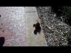 We fed A squirrel! Youtube Vidoes, Squirrel, Squirrels, Red Squirrel