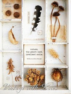Autumn Shadowbox - I love what she does with ordinary things! Nature Collection, Nature Table, Nature Journal, Assemblage Art, Arte Floral, Nature Crafts, Box Art, Dried Flowers, Shadow Box
