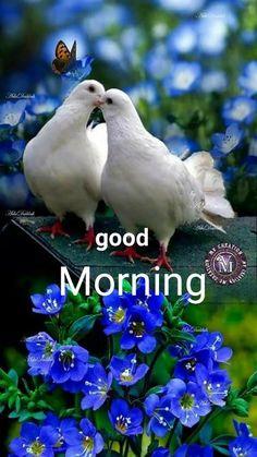Beautiful Nature Pictures, Beautiful Nature Wallpaper, Beautiful Gif, Beautiful Birds, Animals Beautiful, Dove Pictures, Bird Pictures, Exotic Birds, Colorful Birds