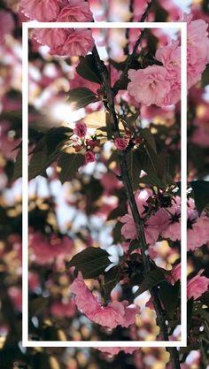 Wallpaper whatsapp flowers phone backgrounds new Ideas Tumblr Wallpaper, Screen Wallpaper, Wallpaper Quotes, Wallpaper Backgrounds, Floral Wallpapers, Cell Phone Backgrounds, Phone Wallpapers Tumblr, Trendy Wallpaper, Flower Backgrounds