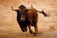 fotos de toros - Buscar con Google