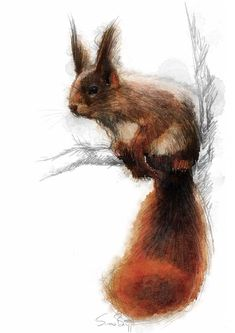 Red squirrel, Artist Sean Briggs producing a sketch a day, prints available at https://www.etsy.com/uk/shop/SketchyLife #art #drawing #http://etsy.me/1rARc0J #squirrel