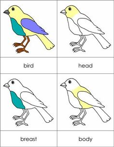 Parts of a Bird from Montessori for Everyone