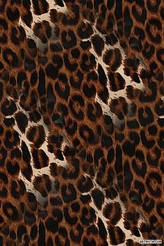 furry leopard print wallpaper for bedroom