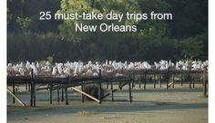 Do you really need to get away for a bit, but just don't have the time or the cash to take an all-out vacation? How about taking a day trip or two? Here are 25 destinations that are within a three-hour drive of New Orleans.  Whether you're looking to soak up a little bit of history or a little bit of sun, or whether you're looking to dig into a set of live music of a plate of awesome food, this list has you covered. It takes short-distance travelers to places as varied as safari parks and…