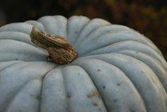 ~*- Gresskar -*~ (Amariel of the Woodlands) My blue fairytale pumpkin! October 2014, Pumpkins, Fairytale, Gardening, Vegetables, Blue, Food, Blogging, October