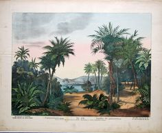 Scholz - Palm Garden Nr. 106 background