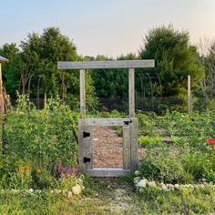 Garden Fencing ideas that are simple #DIY #Gardenfence #gardenideas #cheapgardenideas Garden Fencing, Garden Beds, Bird Netting, Low Fence, Dog Urine, Gardening For Beginners, Permaculture, Hedges, Daffodils