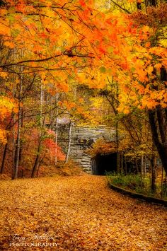Tunnel at the end of the Road to Nowhere (Lakeview Drive) near Bryson City, NC. http://www.facebook.com/TonyPhillipsPhotography