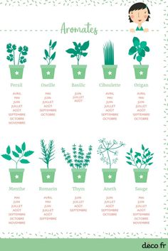Aromatic herbs also have a seasonality