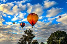 """From """"HOT AIR BALLOON CHECKERBOARD"""": """"Hot Air Balloons Over Trees Photograph by Robert Bales.""""         Note: I pinned all the hot air balloon images found  in this collection (plus all the others I wanted).  Press """"Visit"""" to see other images in this collection from the wonderful photographer Robert Bales (besides hot air balloons) of birds, flowers, natural scenery, et al."""
