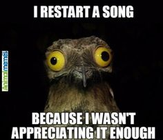 Animal memes Yes that's me...