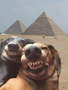 funny animals can't stop laughing . funny animals videos can't stop laughing . funny animals with captions . Baby Animals Super Cute, Cute Baby Dogs, Cute Funny Dogs, Cute Dogs And Puppies, Cute Little Animals, Cute Funny Animals, Doggies, Funny Dog Pics, Funny Photos