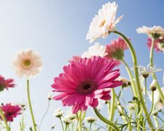beautiful and amazing photos | 15 Beautiful Flower Wallpapers