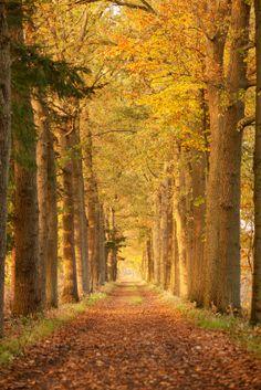 Boswandelingen door het oranjewoud bij FarmCamps De Geele Bosch