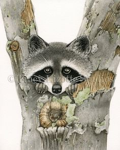 Raccoon 8x10 archival watercolor print by by TracyLizotteStudios