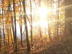 Sunny side Carinthia, autumn Carinthia, Autumn, Plants, Fall Season, Fall, Plant, Planets