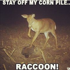 Funny Hunting Quotes Stunning Image Result For Elk Hunting Quotes  Nature  Pinterest