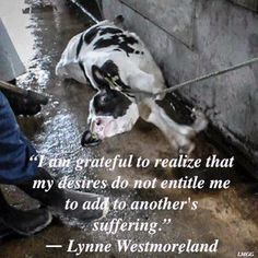 """When you consume ANY dairy, THEY get what YOU pay for. This baby, who was stolen from his grieving mother so humans can make money from her milk, is called """"veal"""" by those who sell and eat his flesh. But in reality he is a terrified, tortured little BABY. Who could be more helpless and entirely at our mercy?"""