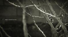 Cardellina by Enea H. Medas  on 500px