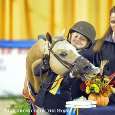 Who's The Cutest Pony In Harrisburg?   The Chronicle of the Horse