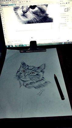 #Estudo Cat..Rabisco Esboço  =  D