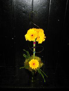 gerbera daisy topiary