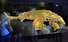 preserved woolly mammoth found frozen in Siberia after 39,000 years - Google Search