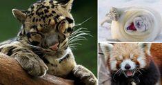 20+animales+que+parecen+estar+extremadamente+felices