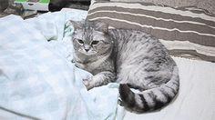 30 de los gatos más torpes y tiernos del 2015