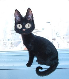 Jiji in Real Life  Andrew Micheal Golden