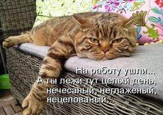Прикольно) | thePO.ST