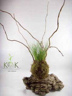 Kokedama Festuca - Kok Arte Natural - $ 85,00