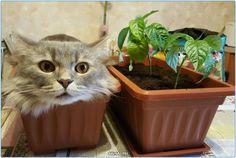 Кошка утром  #утро #доброеутро #день #животные #Россия #Серпухов #Тула #Самара #Москва #СПБ #Хабаровск #Ростов #Подольск #Чехов #Дмитров #кошки #собаки #щенки #кошка #собака #щенок #добро #дела #эмоции #animals #animal #cute #morning #dog #doggy #dogs #pet #pets #cat #cats #lovecat #awesome #hello