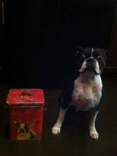 Does this box look like me......Gunny
